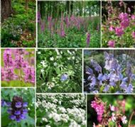 Wildflower Woodland Mix Seeds, Wildflower Shade Mix - 10 grams- ONLY FLOWERS!